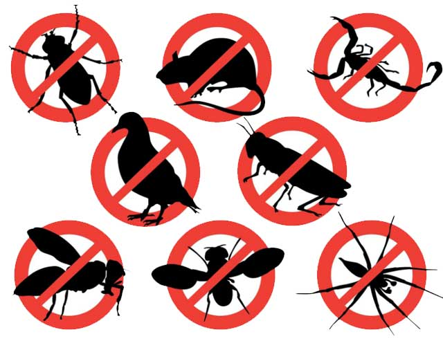 5 Most Common Pests Found in Orlando Homes and How to Get Rid of Them