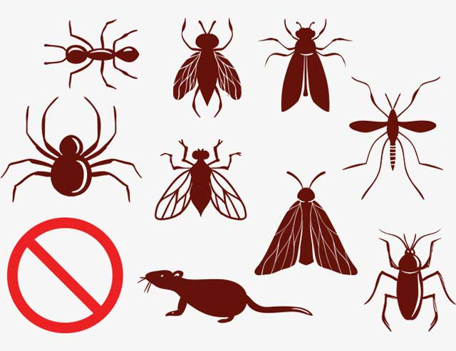 6 Things Orlando Residents Should Look for In A Pest Control Service