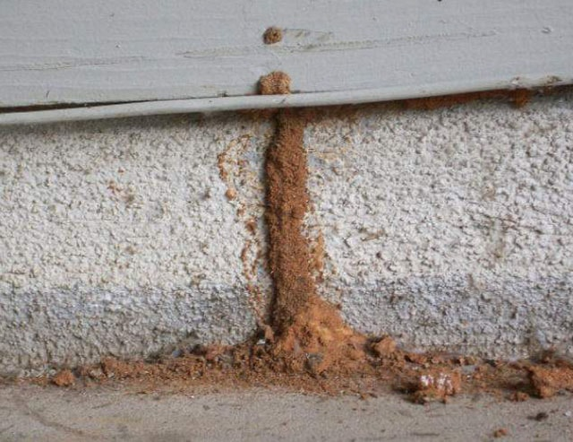 What Do I Do If I Find Termite Tubes Around My Home?