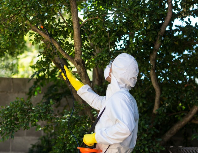Insect proofing for the outside of your home