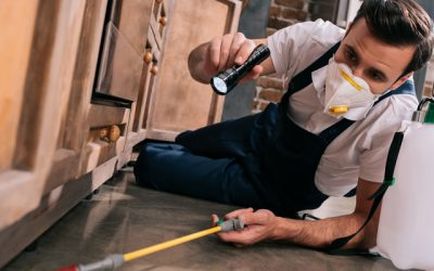 5 Myths Dispelled About Pest Control