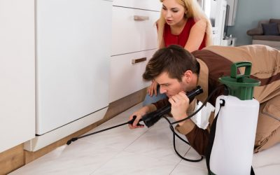 How doing your own pest control can do more harm than good
