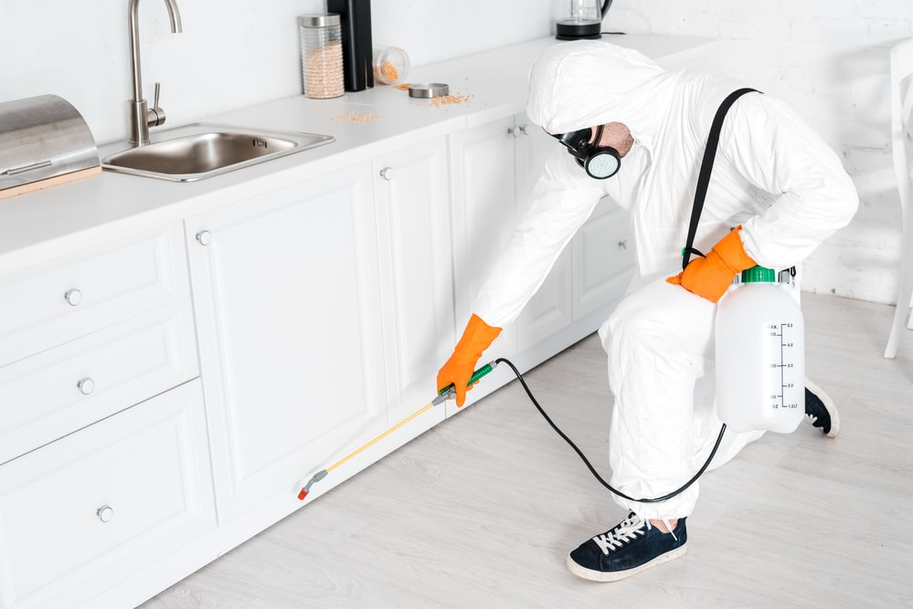 Is Monthly Pest Control Necessary?