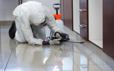 Who is Responsible for Pest Control in a Rental Property