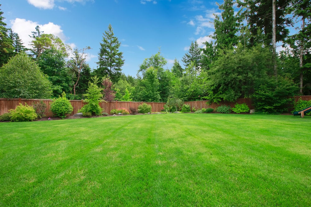 Our 2 Week Guarantee for a Thicker, Greener Lawn